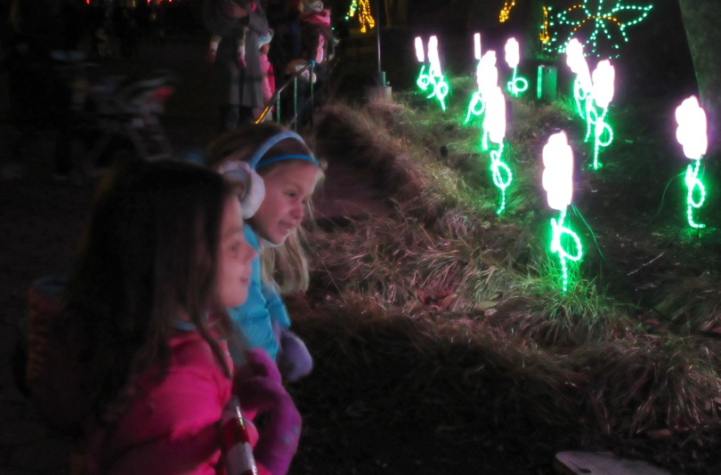Zoo Lights: A Washington D.C. Holiday Tradition